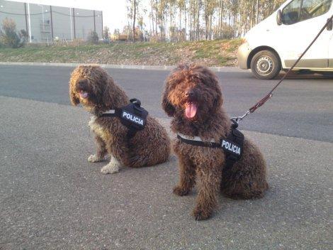 armada-espanola-perro-agua-andaluz-2